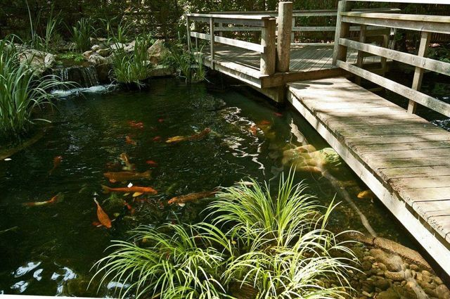 Is that water under your backyard bridge sometimes for Koi pond deck