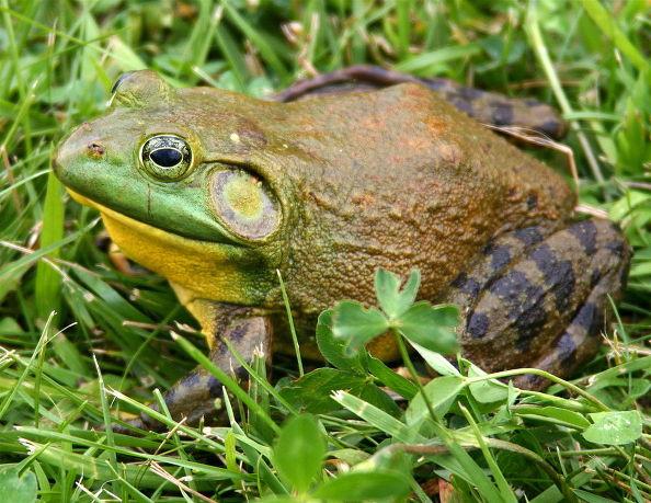 How Wildlife Aid Ecosystems: