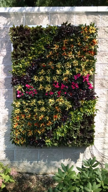 Outdoor Living Walls: