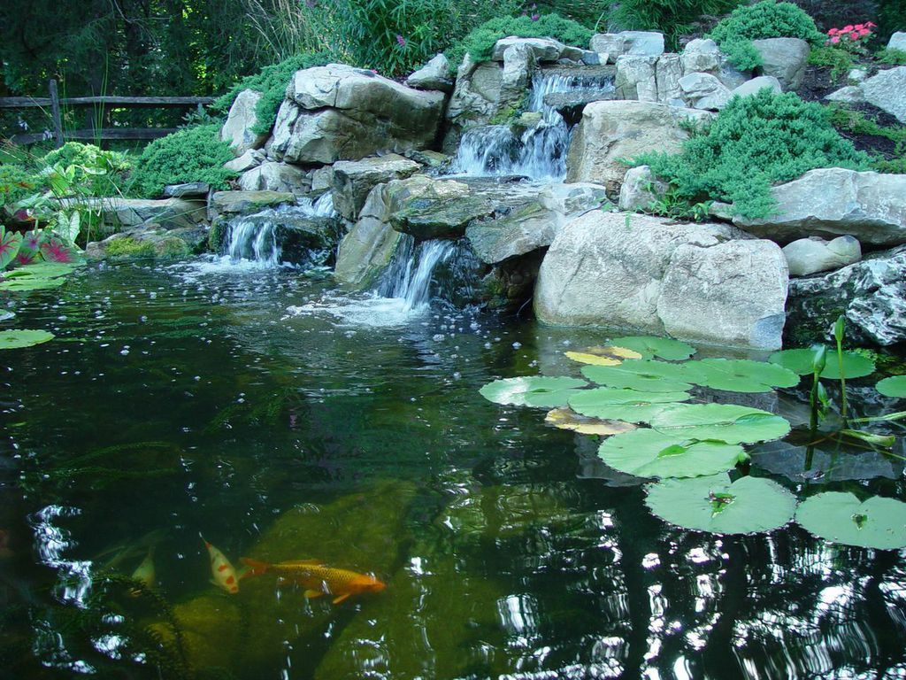 Prepare Ponds in Fall for Winter: