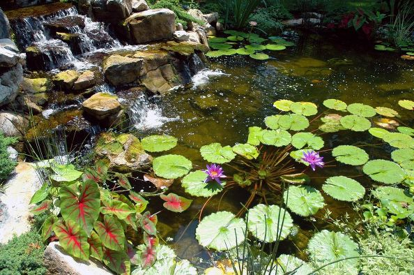 Koi ponds for Fish pond preparation