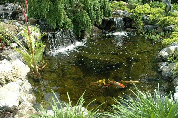 Prepare Pond Fish for Winter: