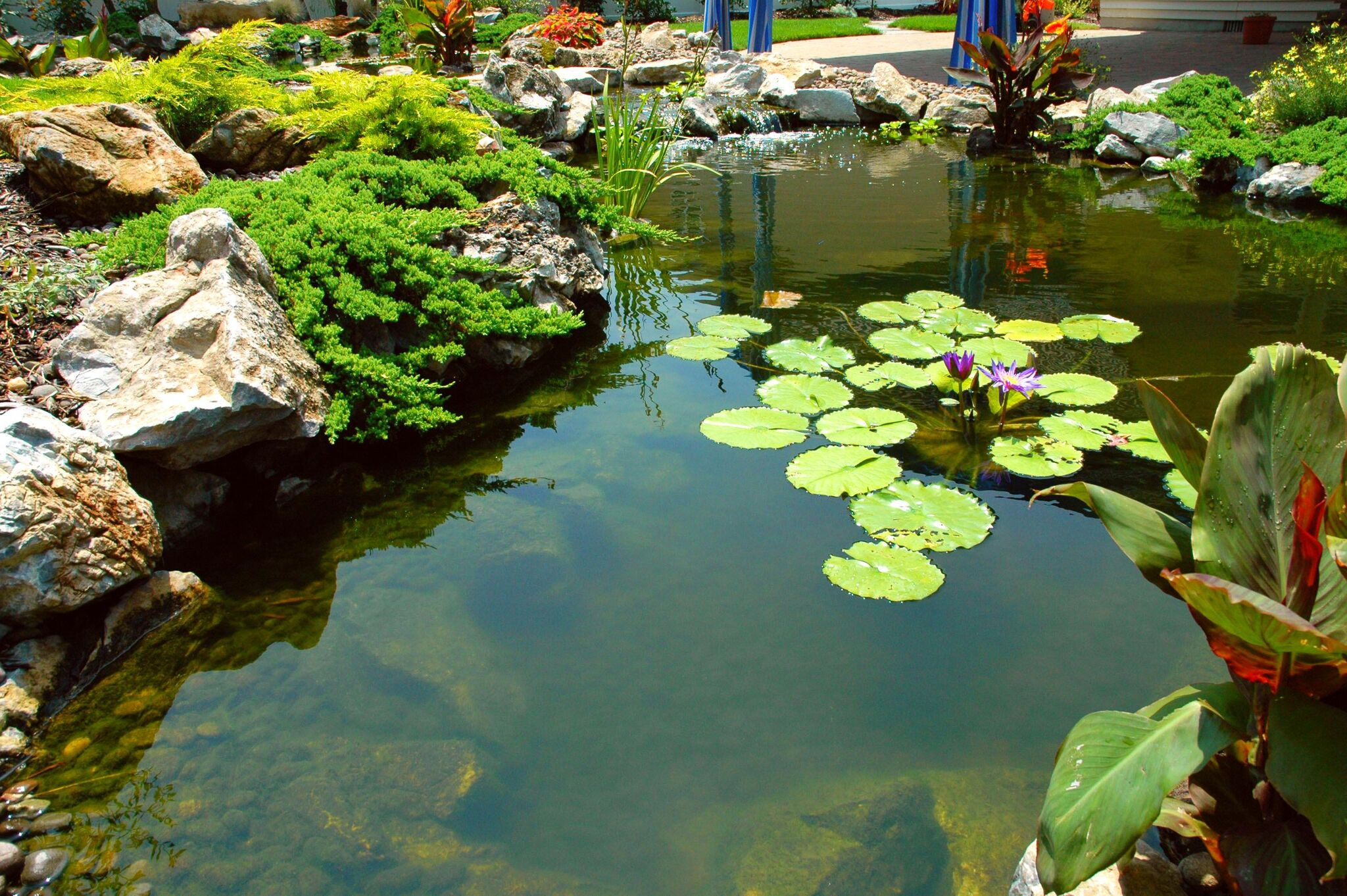 The benefits of aquatic plants and water garden landscaping for Koi pond deck
