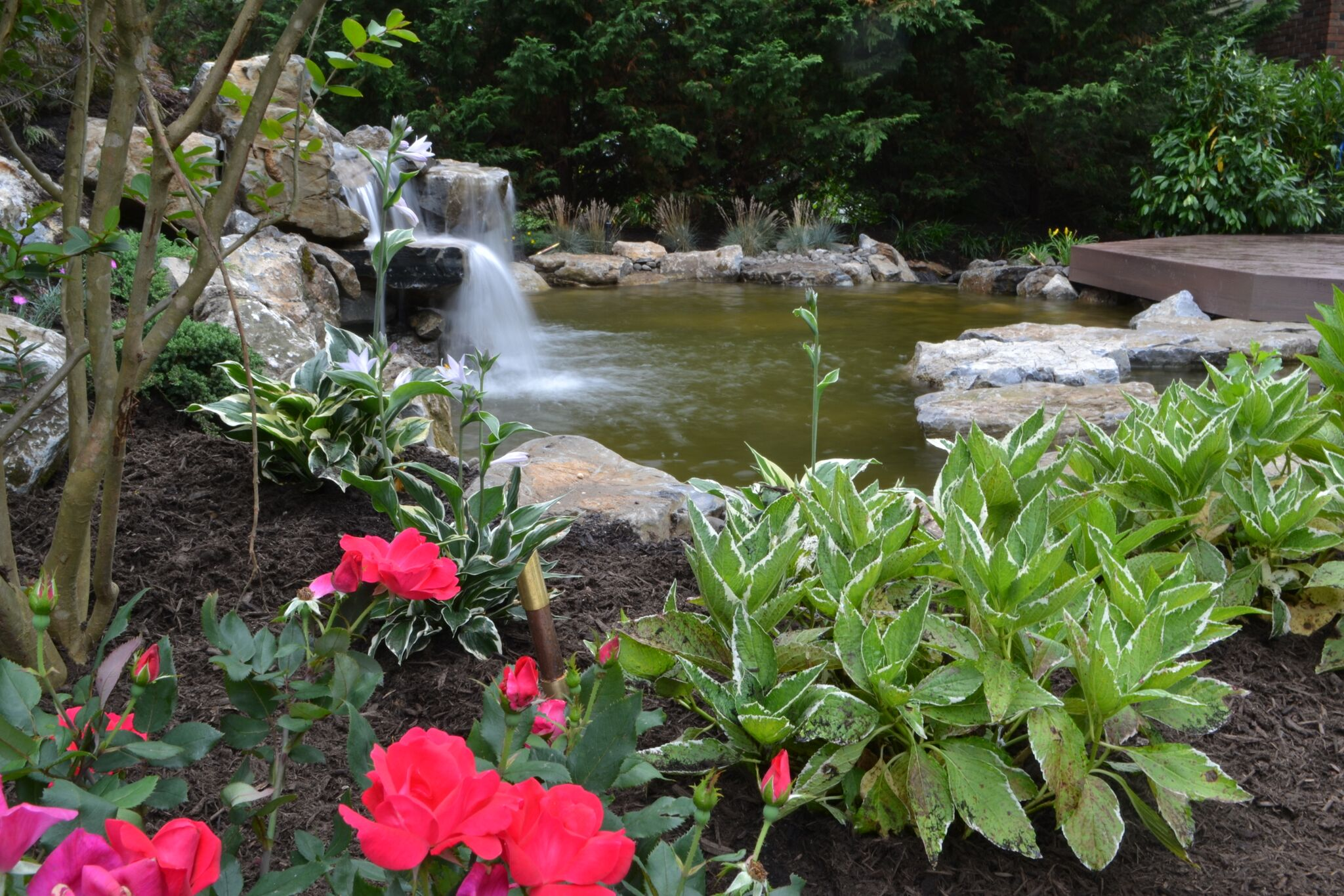The benefits of aquatic plants and water garden landscaping for Koi pond maintenance near me