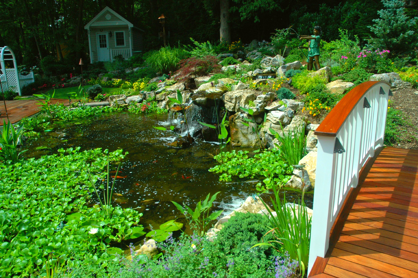 Aquatic Plants for Ponds: