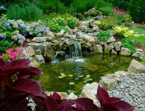 Backyard Pond and Stream Turns 'Day at the Pond' Into 'Every Day'