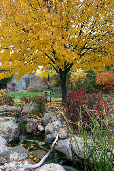 Tree Maintenance in Fall: (Photo: Aquascape, inc.)