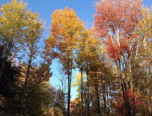 Fall Foliage: Tips for Backyard Maintenance