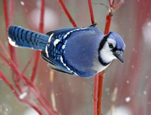 Winter Garden Hues: Birds of a 'Colorful' Feather