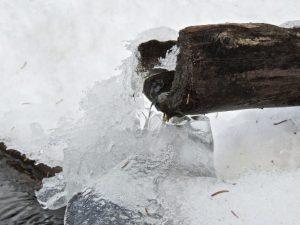 Winterizing Water Gardens