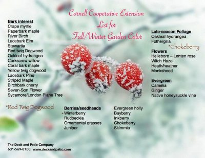 Garden Color for Fall and Winter
