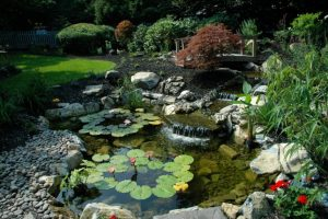Healthy Pond Eco-Systems