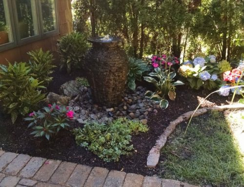Recipe for a Delightful Garden: Just Add Water!