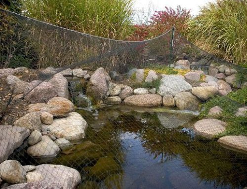 Net Your Pond in Fall, If You Can't Leave It To Beavers