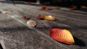 Leaf Tannins Stain Decks