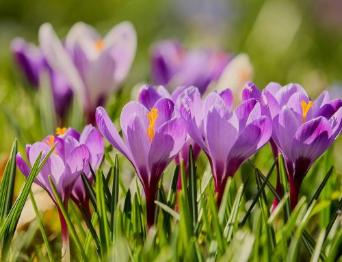 Gardening: There's a Fall Chill in the Air. It's Time to Think Spring
