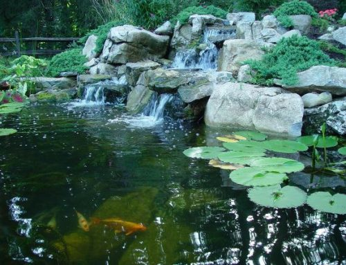 Caring for Ponds/Pond Fish in Fall