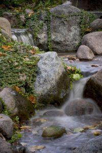 Leaves In Backyard Stream