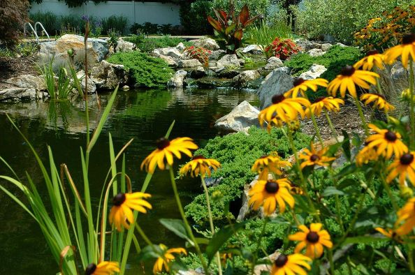 Healthy Ponds: