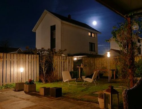 Gardening Trends: Planting Your Garden by Phases of the Moon