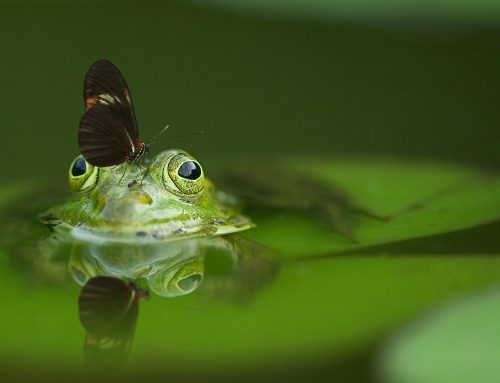 Key Elements of a Healthy, Low-Maintenance Pond