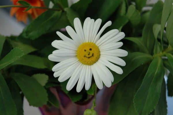 Flowing Water Soothes, But Flowers Make Us Smile