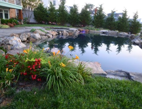 Pool Design Trends: You Don't Have to Go 'Natural' to Look 'Natural'