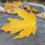 Choosing the right Maple