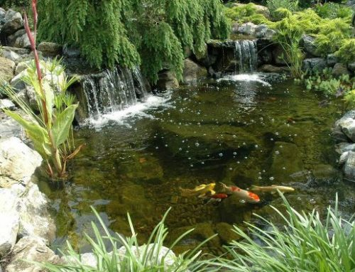 It's Time to Fatten Up Your Pond Fish