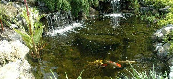 Healthy Ponds Come Spring