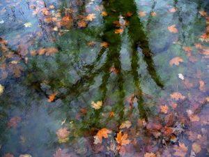 Ponds in Autumn