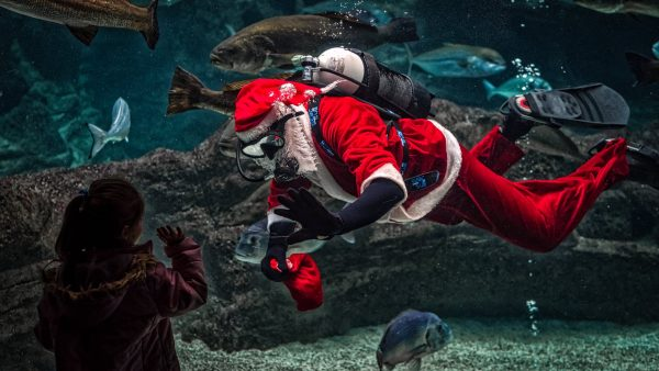 The Gift of Snorkeling: