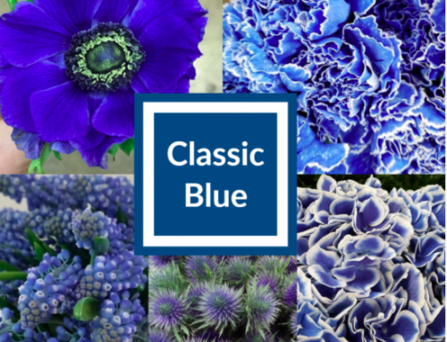 Landscaping with Pantone's Color for 2020:  'Classic Blue' Is Elegant and Reassuring