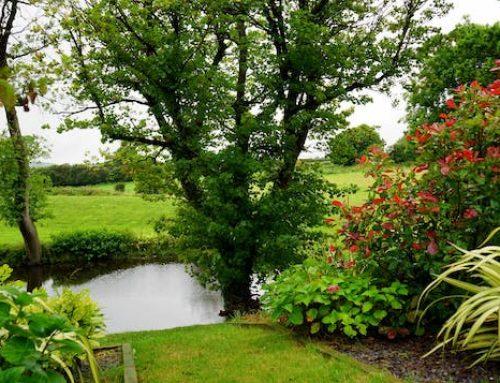 The Healing Benefits of a Garden