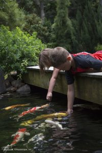 Children Love Koi