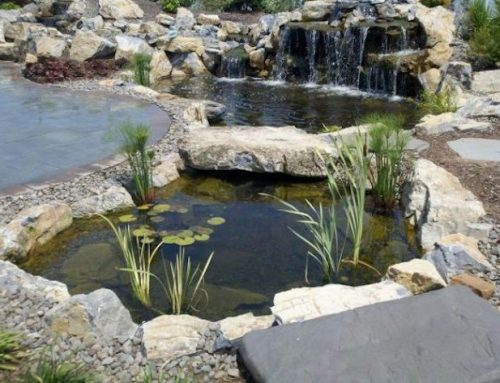 Avoid Cabin Fever and Spring Clean Your Pond