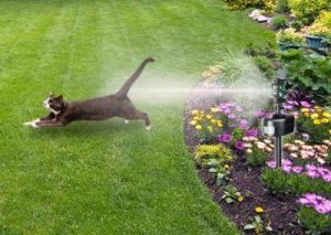 Motion-Activated Sprinklers