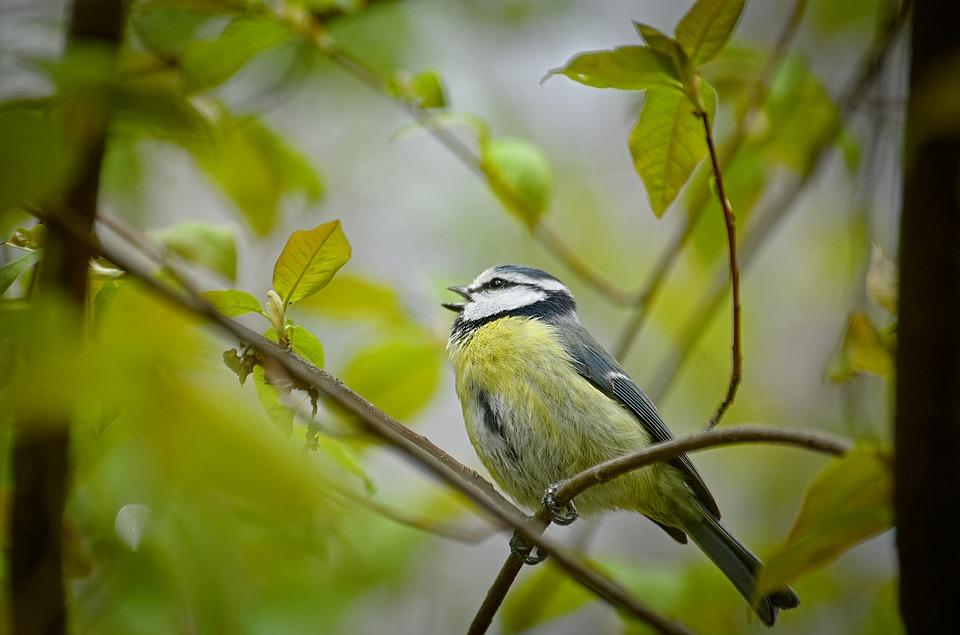 Attracting Birds