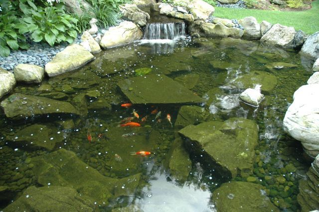 Waterfall-Fed Koi Pond: