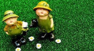 Lawn Reduction: Initial Steps