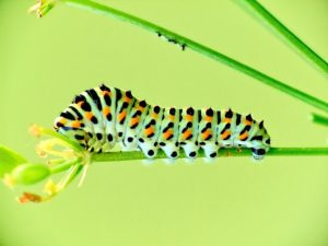 Creating Safe Habitats for Caterpillars