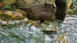 Fallen Leaves Affect Pond Ecosystems