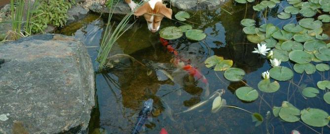 Good Pond Design: