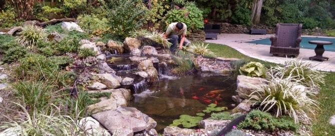 Pond maintenance for Backyard pond maintenance