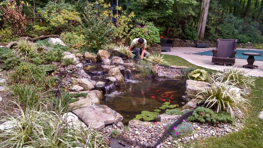 Fall pond maintenance netting the leaves fall where for Koi pond maintenance near me