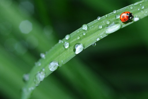 Healthy Ecosystems: