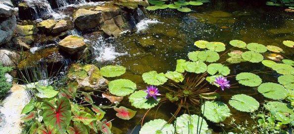 Water Plants in Winter:
