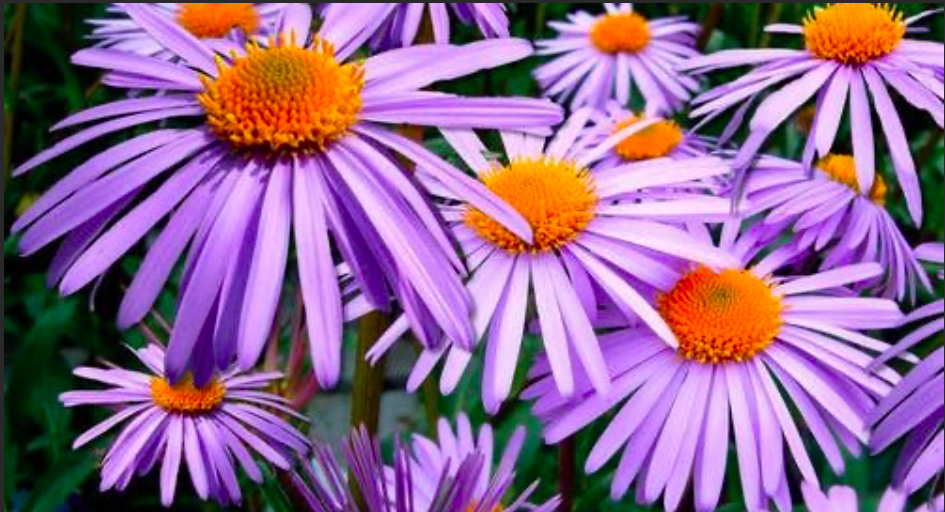 Spruce Up the Yard with Pops of Color this Labor Day